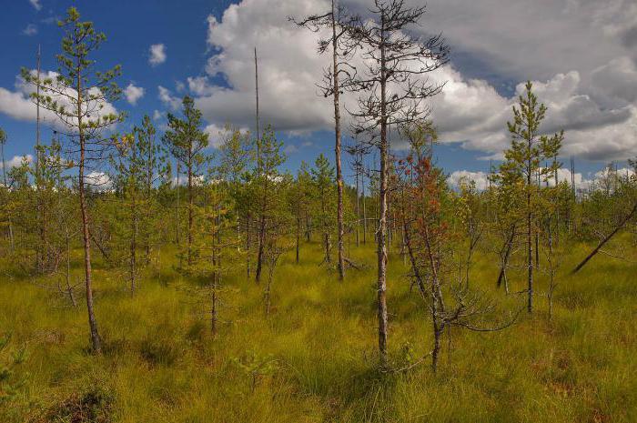 Типы болот России