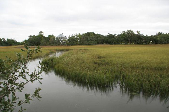 Основные типы болот