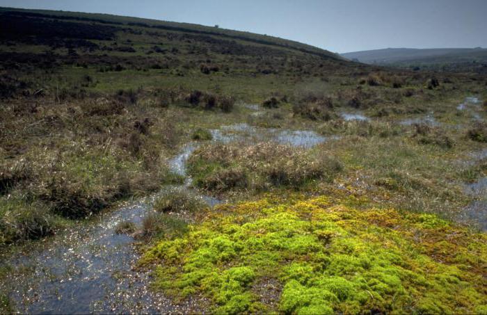 Типы болот и их характеристика