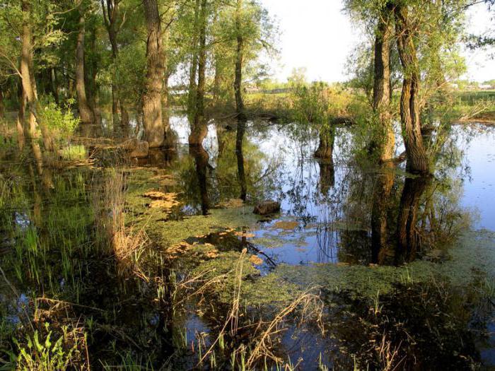 Типы болот