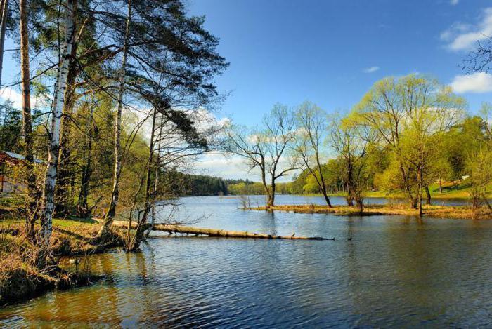 Кратовское лесное озеро, ммр