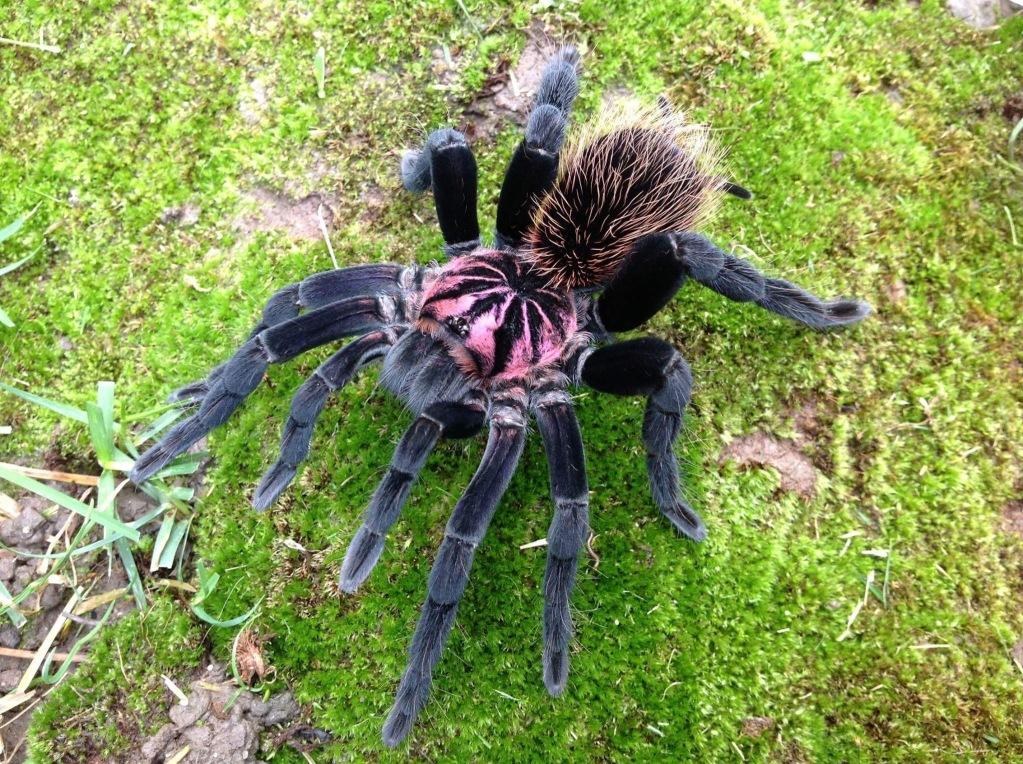 опубликовала картинки самава большова паука рисуем немного