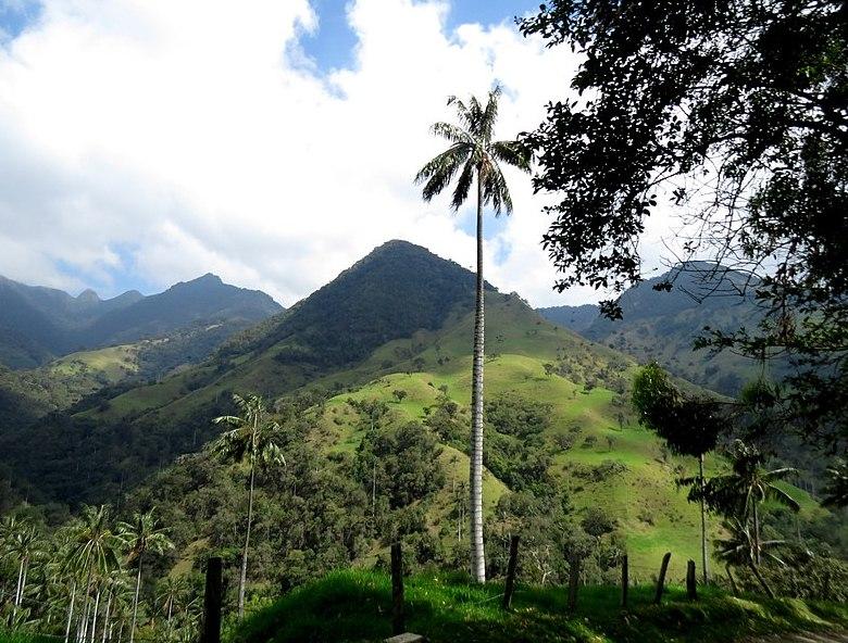 Где растет финиковая пальма