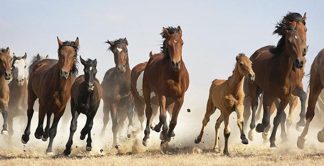 Секс лошадей и других копытных