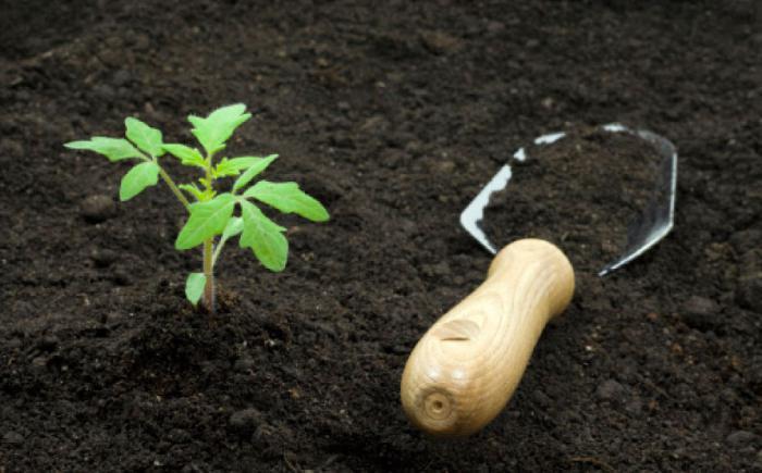 как правильно приготовить почву грунт для рассады