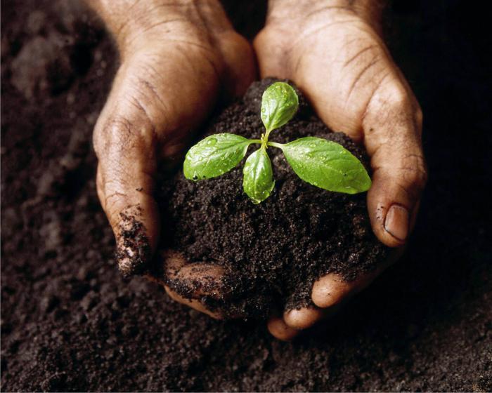 землю обеззараживаем землю для рассады