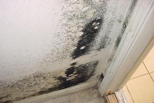 чем убрать плесень на стенах в квартире