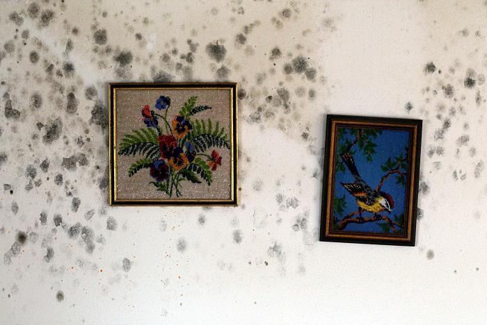 как избавиться от плесени на стенах в квартире навсегда