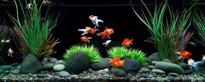 правила аквариумиста