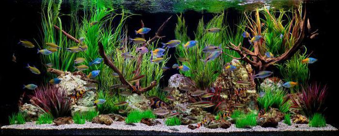правило аквариумиста 3 класс