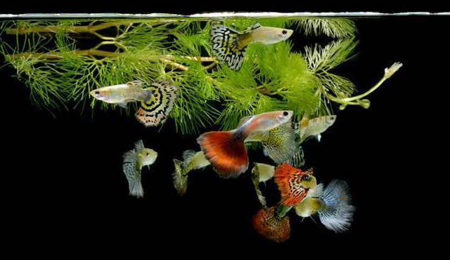 правило начинающего аквариумиста