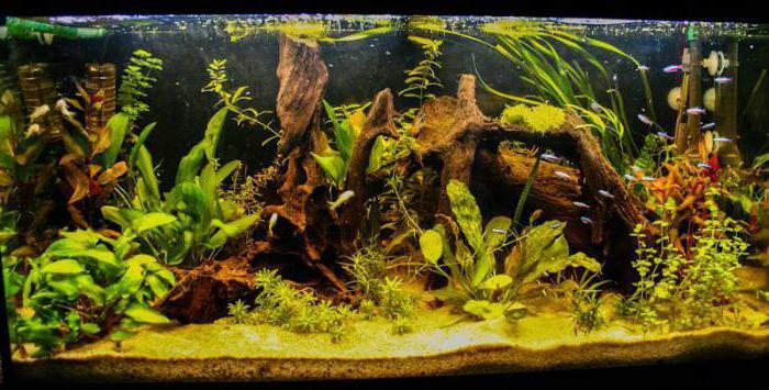 правило аквариумиста окружающий мир 3 класс вахрушев