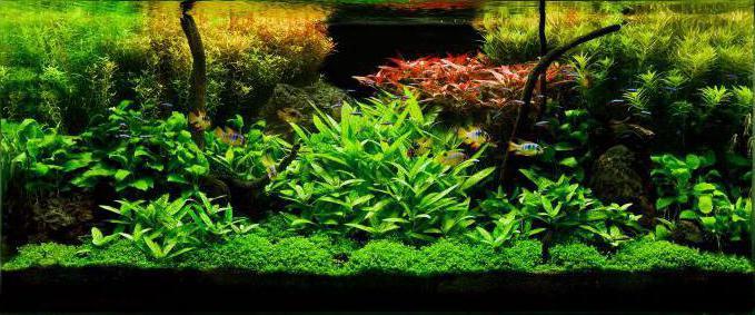 правила аквариумиста окружающий