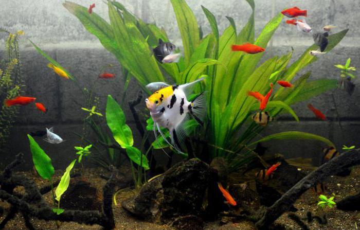 правила аквариумиста для детей