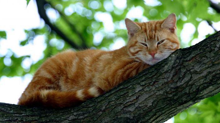 возраст кота по человеческим меркам таблица по месяцам