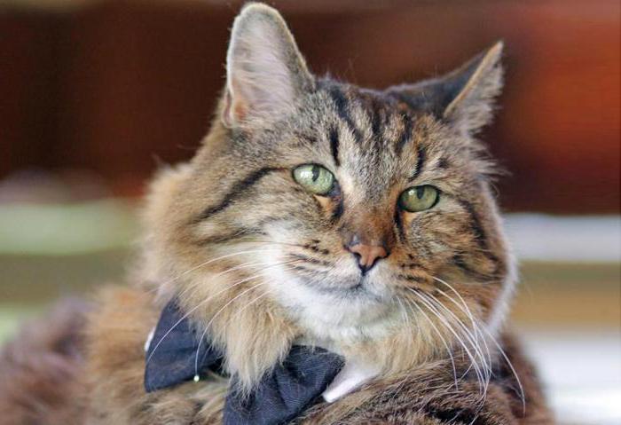 возраст кошки по человеческим меркам фото