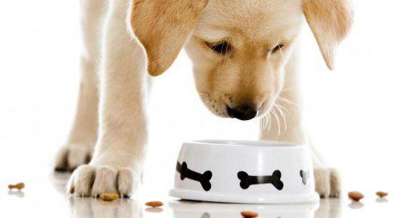 корм biomill для собак