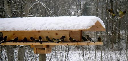 Наблюдение за птицами зимой и осенью