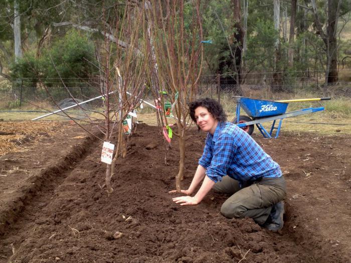 Когда в подмосковье сажают плодовые деревья 70
