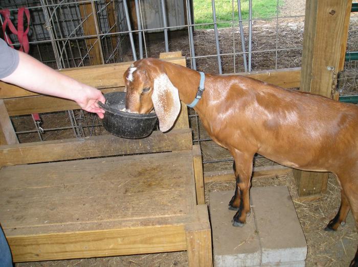 сколько литров молока дает коза в течении суток [