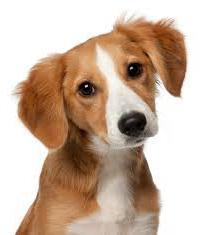 Какие лекарства с панкреатитом для собак thumbnail