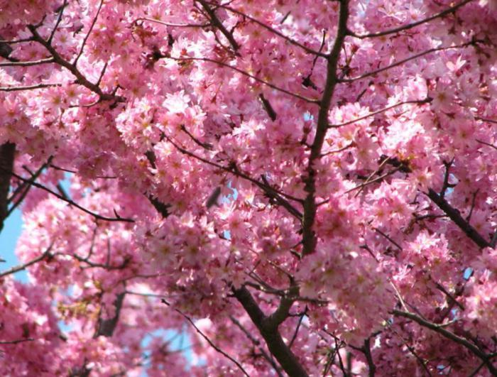 какое дерево в мае цветки белые