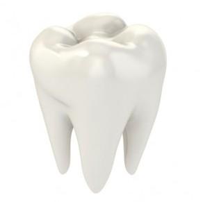 Строение зубов человека схема