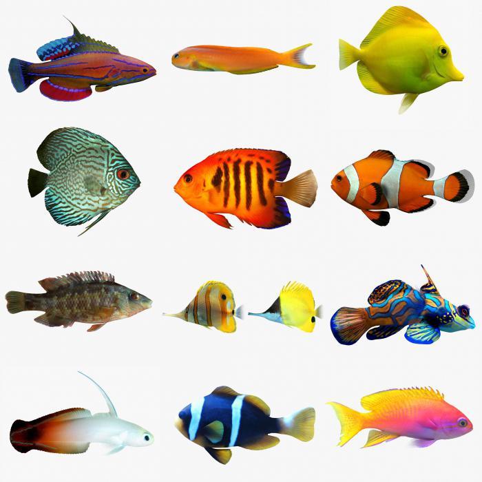 аквариумных рыб (таблица
