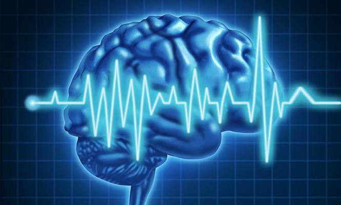 ээг головного мозга что показывает