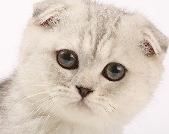 содержание кошек