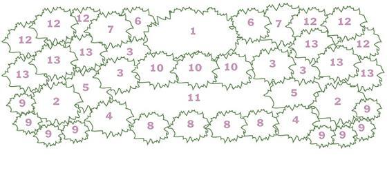 схема клумб