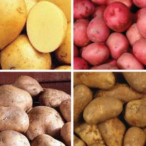 Картофель семенной сорта