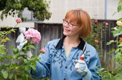 чем подкормить розы в мае