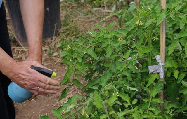 Медный купорос применение в садоводстве как разводить