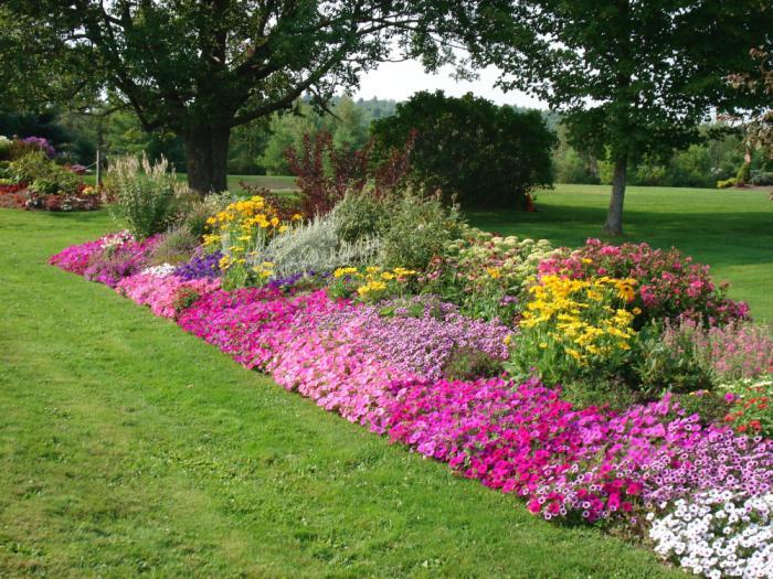 как красиво оформить клумбы с цветами