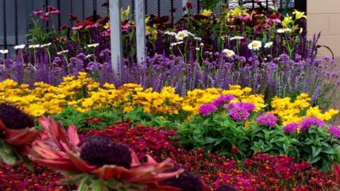 как красиво оформить цветочную клумбу