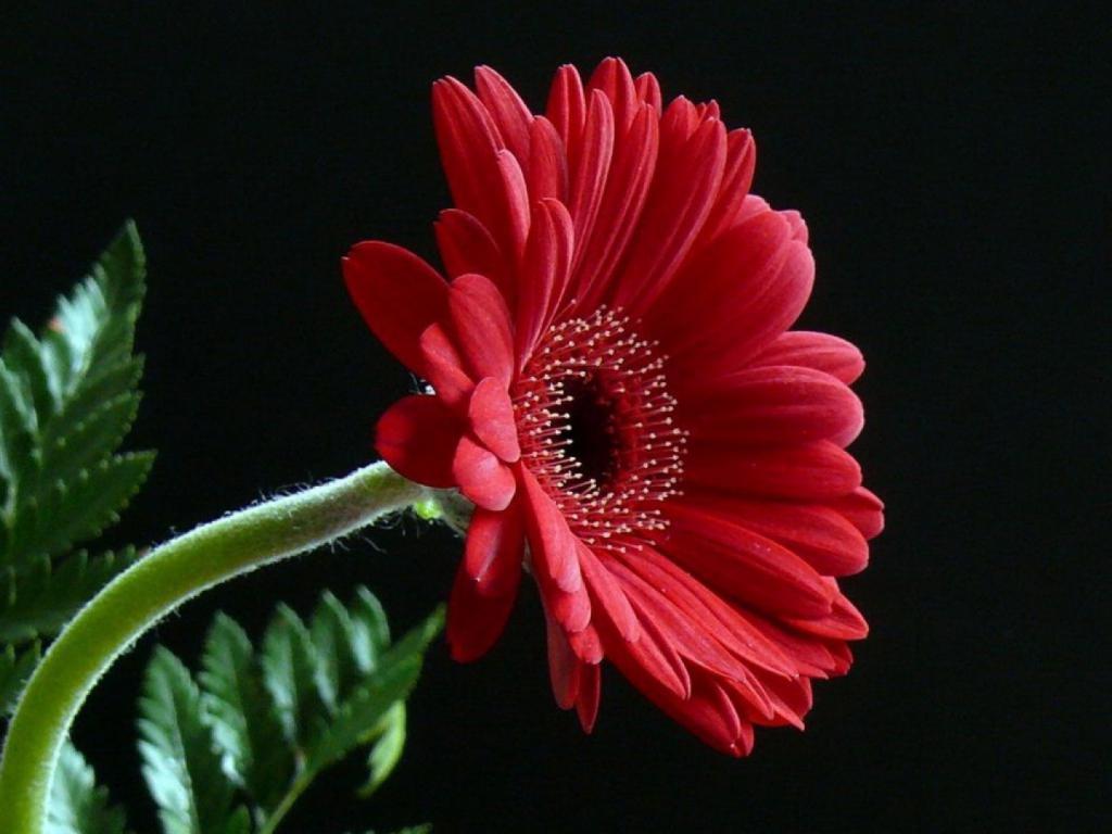 значение цветка