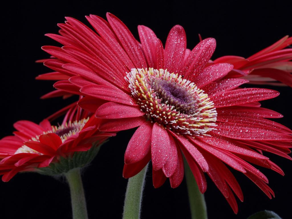 красный цветок