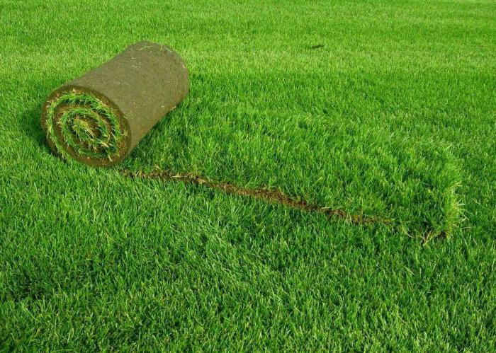 Как выбрать и где купить семена газонных трав: советы начинающим