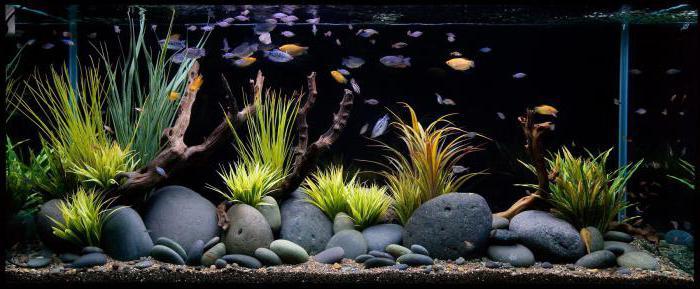 силиконовый декор для аквариума