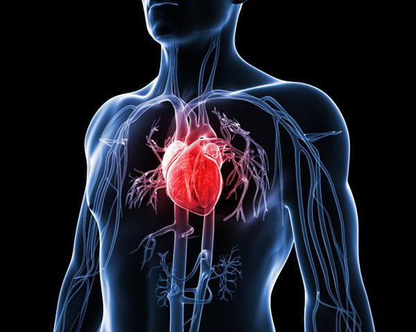 как укрепить сердце советы кардиолога