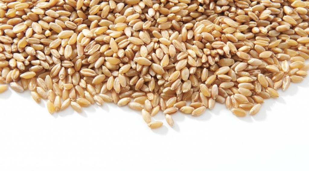 chemical composition of germinated wheat