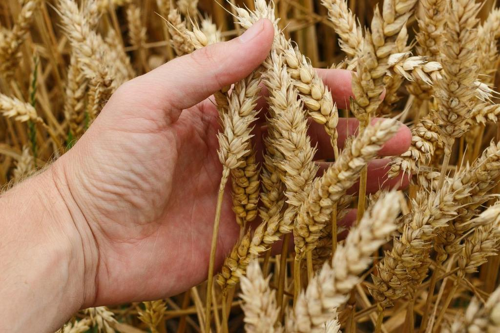 wheat chemical composition and nutritional value