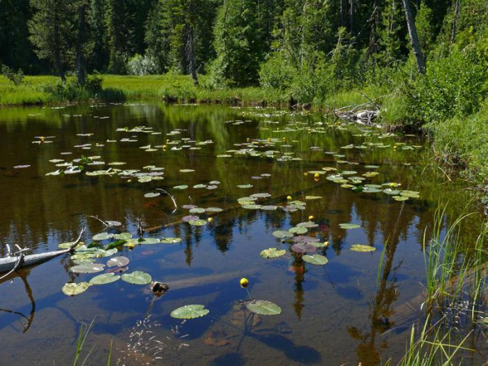 озеро красавица большое симагинское озеро
