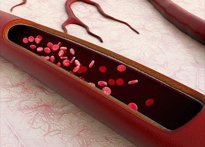 тромбоцитопеническая пурпура у взрослых анализы