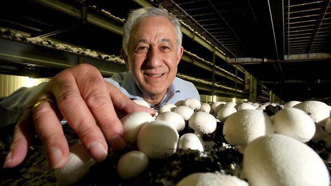 Компост для грибов своими руками