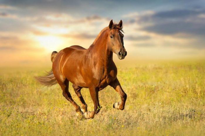 коня на переправе не меняют