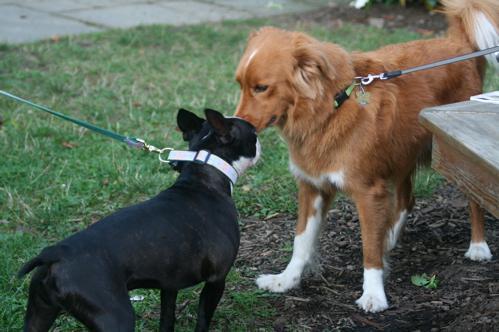Поводок-рулетка для собак