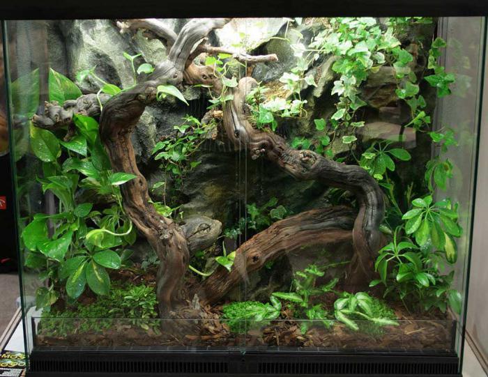 акватеррариумы для красноухих черепах фото