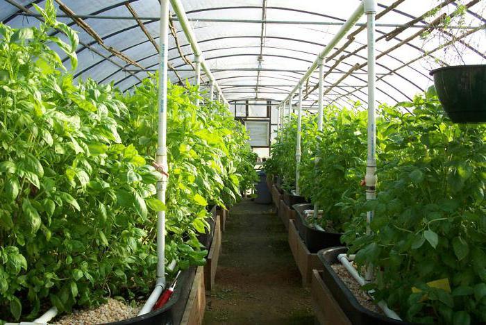 Теплицы для выращивания овощей своими руками